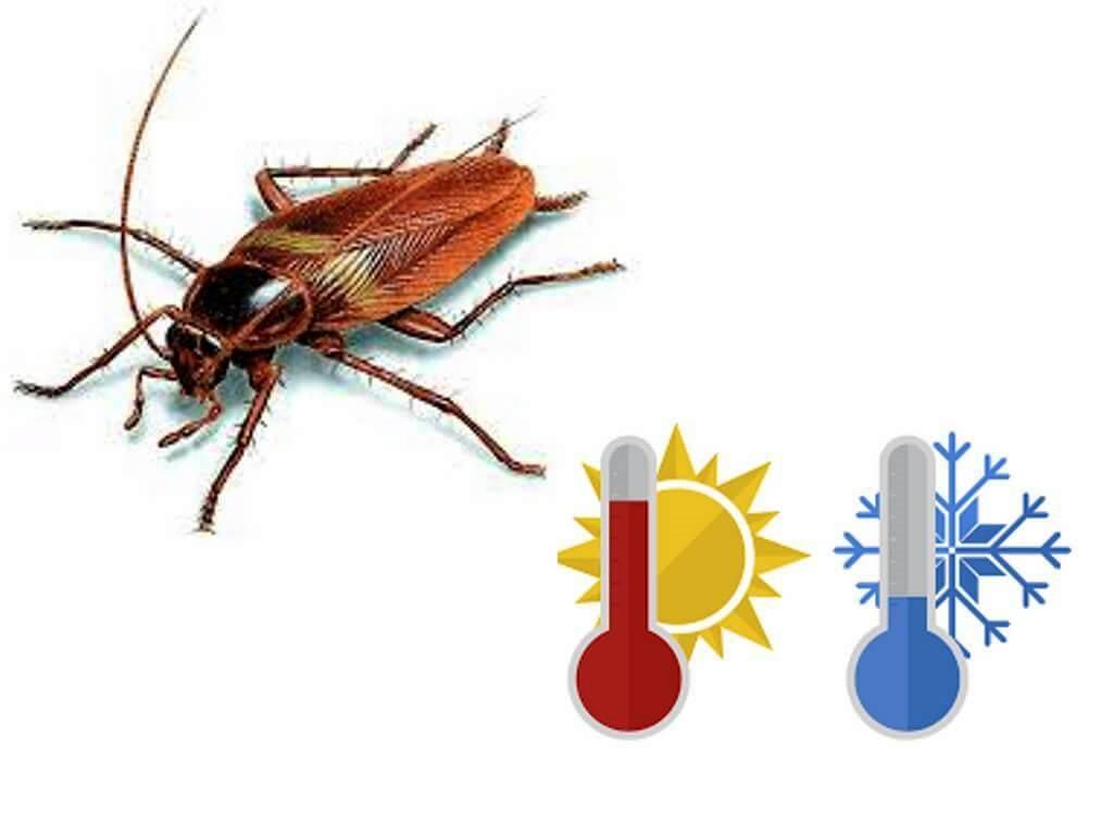 В старину на Руси от тараканов избавлялись путем вымораживания зимой избы